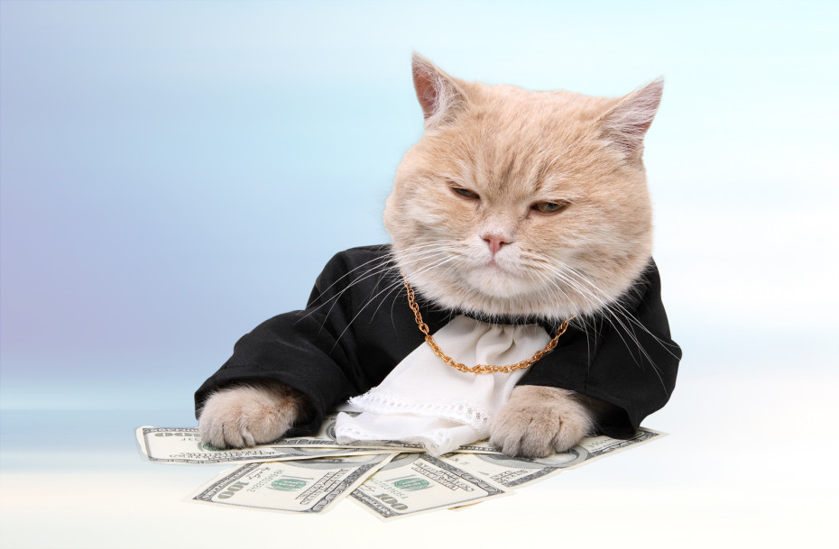 funding-daily-cat-930x609